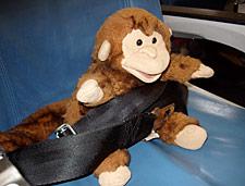 monkey in seatbelt